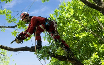 find trusted rated Mitcham tree surgeons in Merton