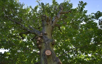 what is Mitcham tree surgery?