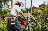 Mitcham tree removal services